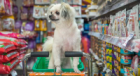 How to Save Money on Pet Food and Pet Products