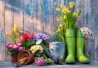 Spring Gardening Tips for Beginners