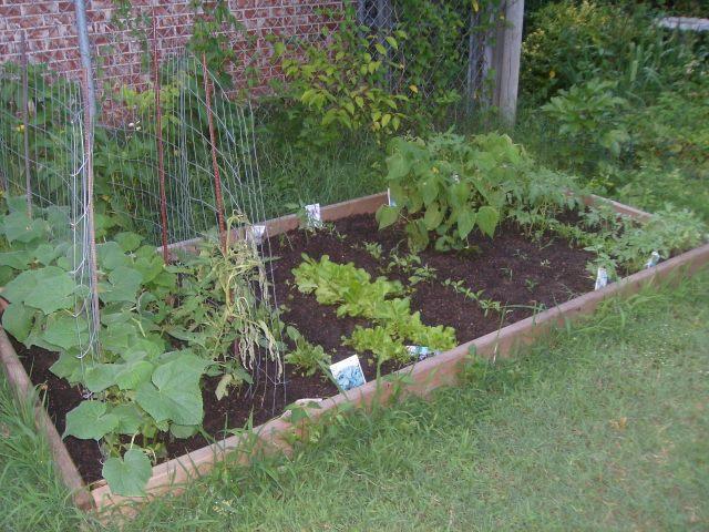 Spring Gardening Tips For Beginners